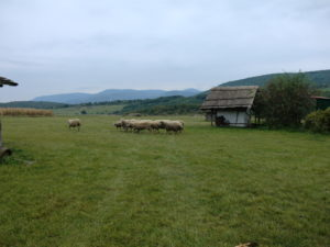 Biogazdálkodás Kacár tanyán 2